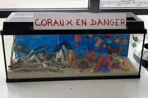 Coraux-en-danger-300x200